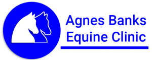 Agnes Banks Equine Clinic